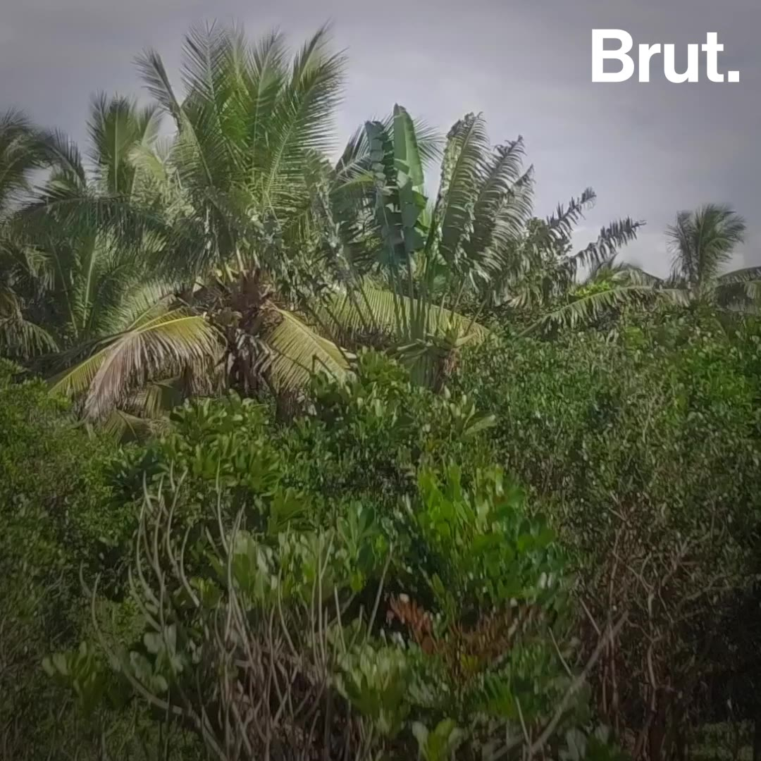 5 good news stories for the planet | Brut.