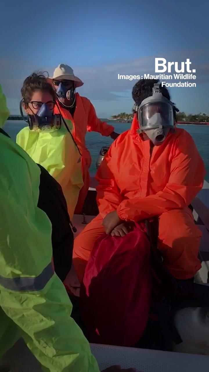 Île Maurice : cette ONG sauve la biodiversité menacée par la marée noire | Brut.