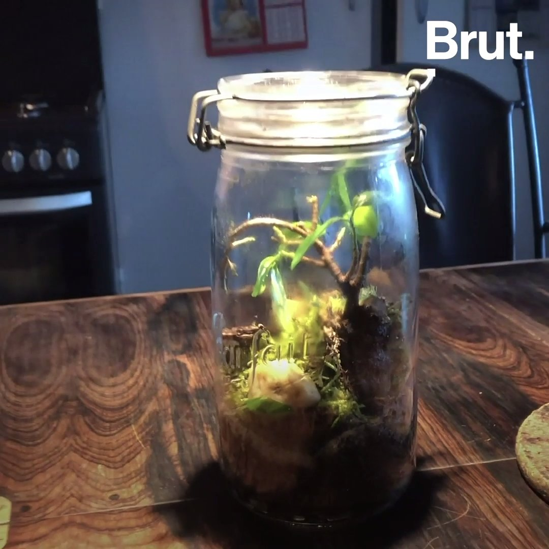 Tutos jardinage : comment fabriquer un terrarium | Brut.