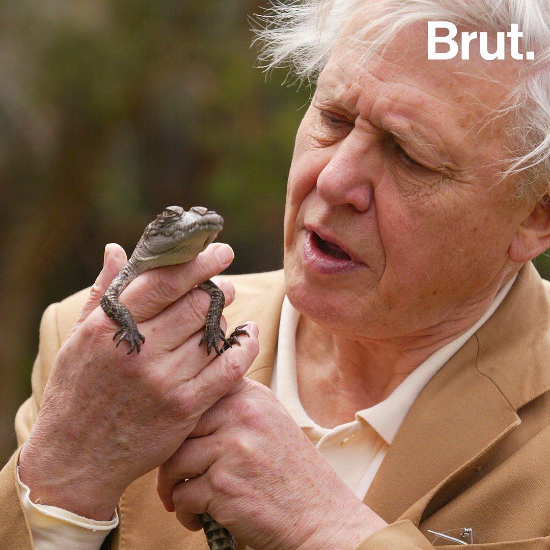 Une vie : Sir David Attenborough | Brut.