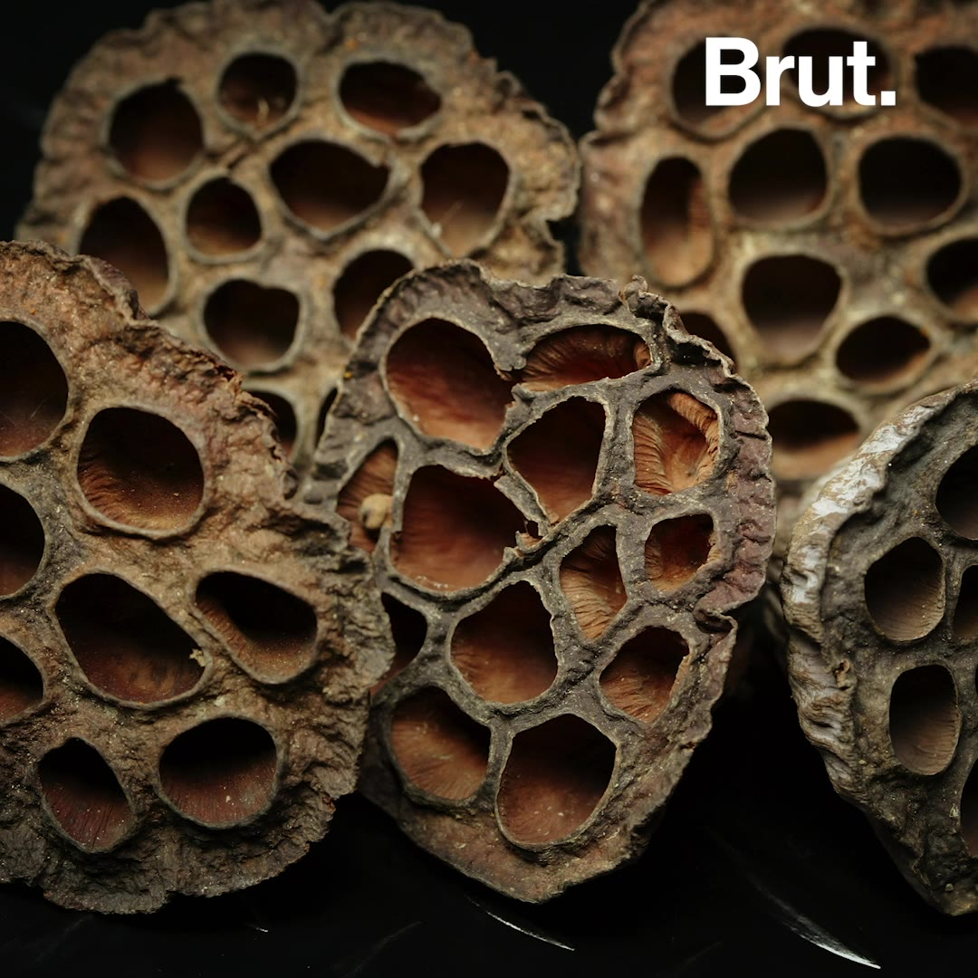 What Is Trypophobia Brut