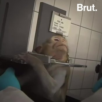 Animal Torture Around the World