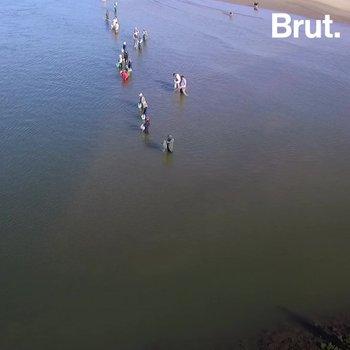 Brazil: dolphins working alongside fishermen