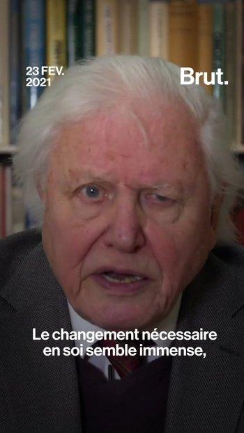 Changement climatique : l'appel de David Attenborough à l'ONU