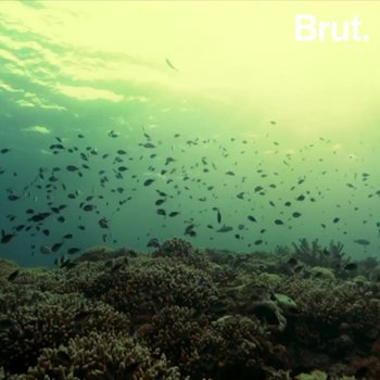 How this atoll in the Philippines regained its biodiversity