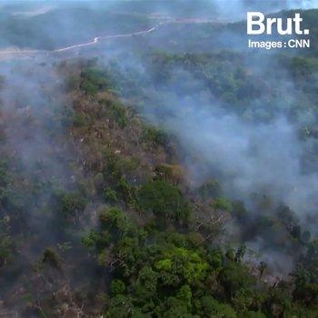 Incendies en Amazonie : les internautes se mobilisent