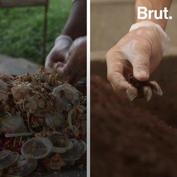 Initiative low-tech : transformer les déchets en compost grâce aux mouches