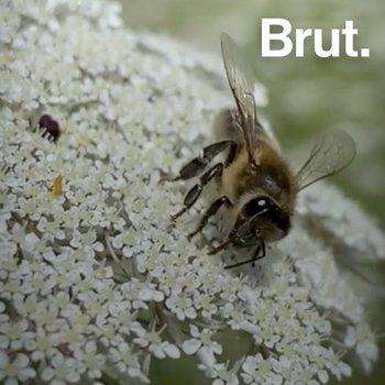 Les 8 métiers des abeilles