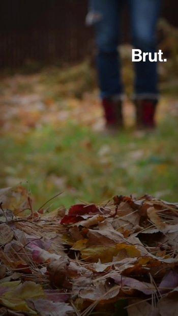 Se recogen las hojas muertes en otoño ¿si o no?