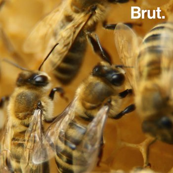 Turning Urban Blight Into Bee Farms