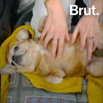 Tuto confinement :  comment garder un animal à la maison