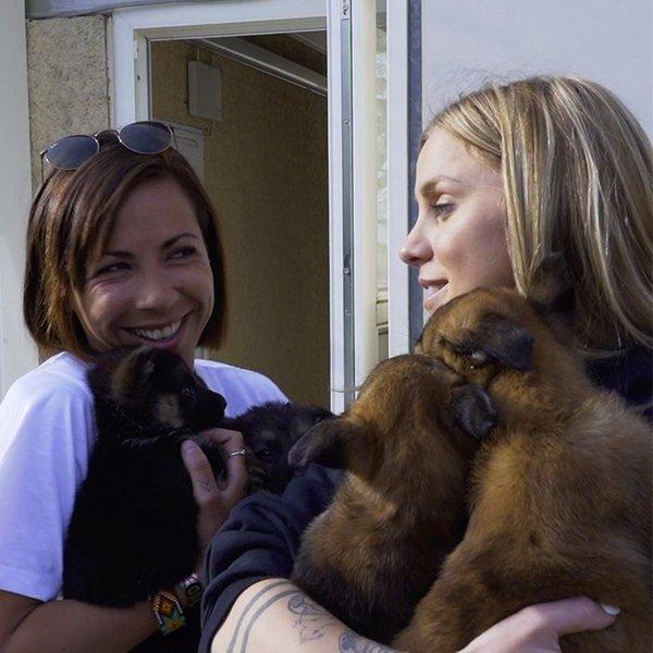 Au secours de chiens maltraités avec 30 millions d'amis