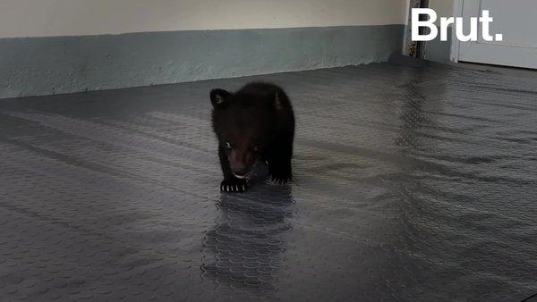 Cet ourson a échappé de justesse au trafic illégal