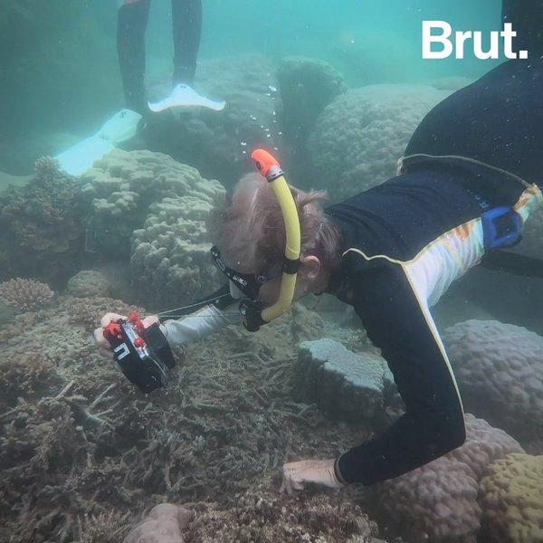 En Nouvelle-Calédonie, ces grands-mères répertorient les serpents marins
