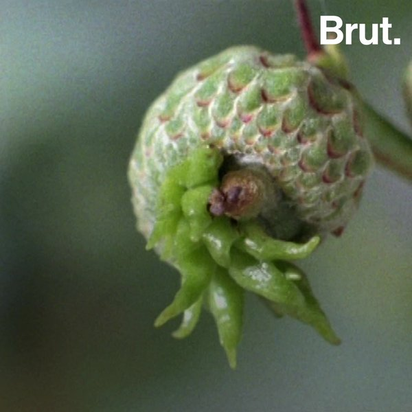 Parasitism >> This Is How Parasitism In Plants And Insects Works