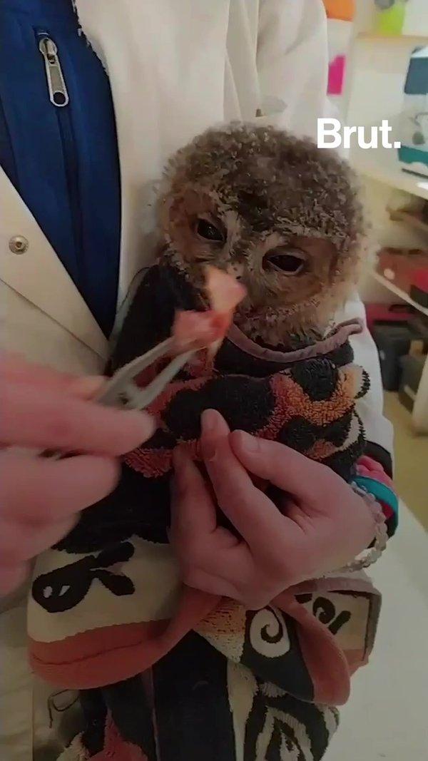 Voluntarios en este hospital francés curan animales salvajes heridos